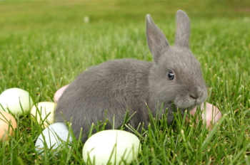 Easter Hop to It Easter Is Almost Here: Hop to It!