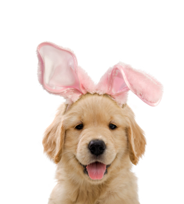 Easter Puppy Easter Restaurant Reservations: Celebrations to Make Sunday Special