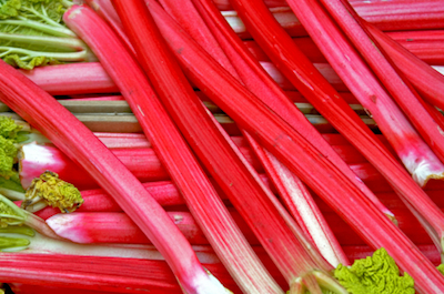 Rhubarb Trending on Recent OpenTable Restaurant Reviews: Rhubarb