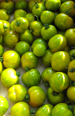 Green Zebra Tomato Trending on Recent OpenTable Restaurant Reviews: Heirloom Tomatoes