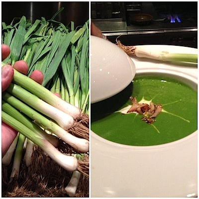 Green Garlic Trending on Restaurant Reviews: Green Garlic