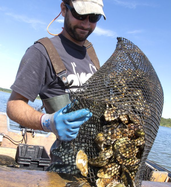 'Rhode' Trip: Rhode Island Oysters + Where to Order Them This Summer #savortheroad