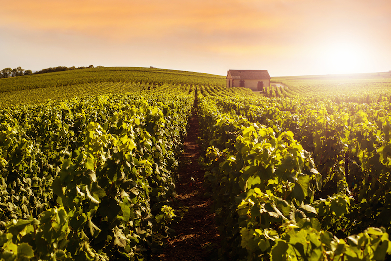 Farm To Glass Why Sommeliers Wine Directors Love Grower