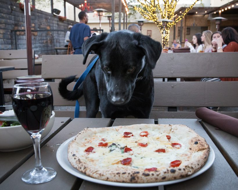 Woof! 15 of the Most Dog-Friendly Restaurants Perfect for Dining With Dogs