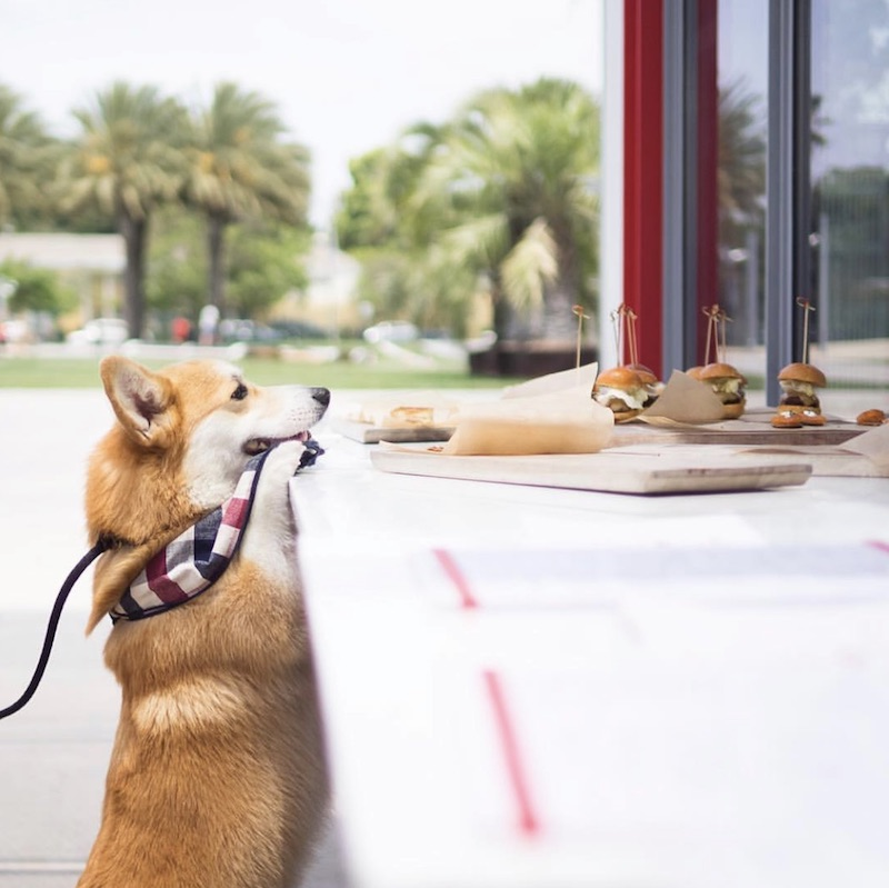 Most Dog-Friendly Restaurants