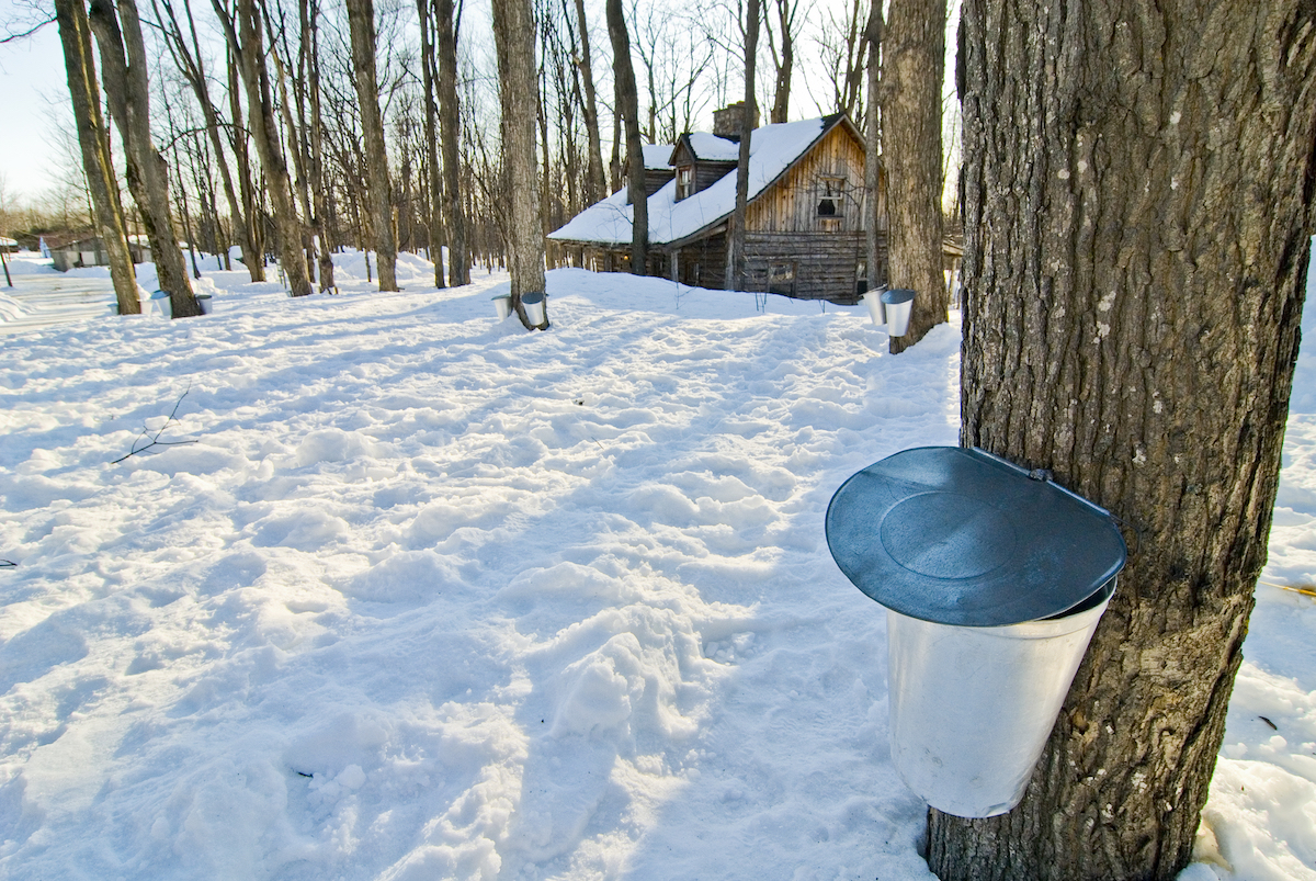 Canada Restaurants Celebrating Maple Season
