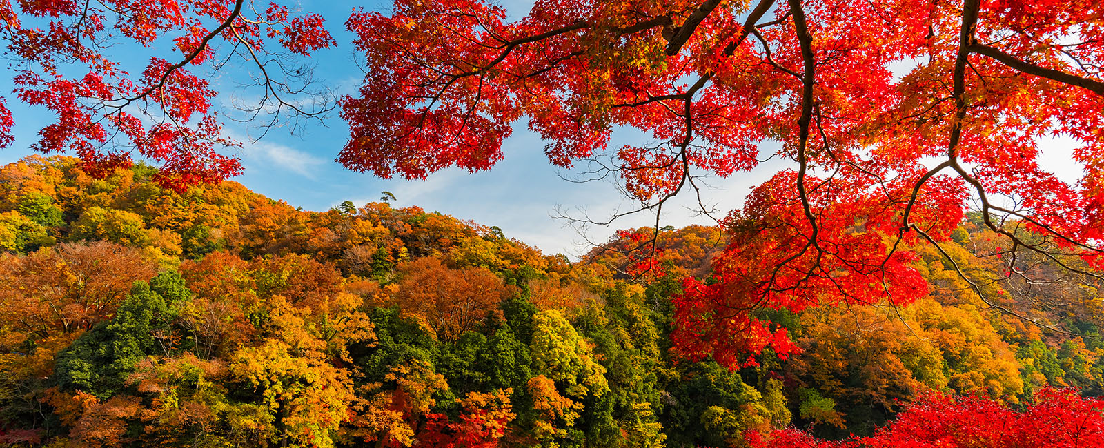 Peak Autumn: 8 Restaurants With Brilliant Fall Foliage Views