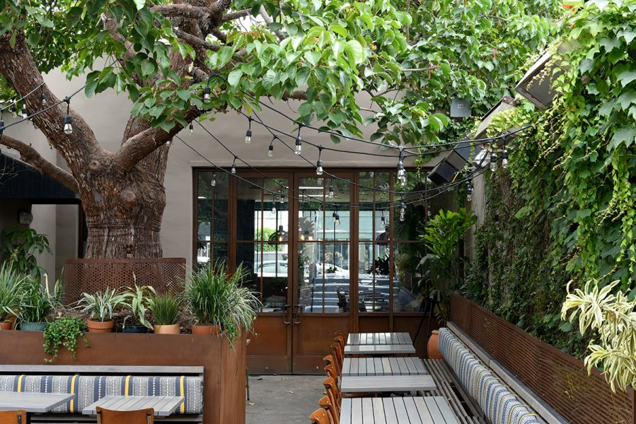 A foliage-filled outdoor patio